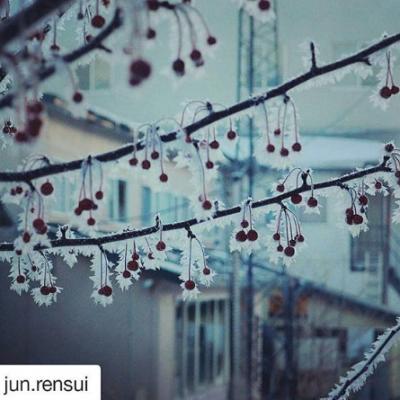 【北海道ミライノート×Domingo】釧路市の霜のついたナナカマドなど