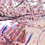 新しい仲間と出かけたい!北海道の4月のイベント2選!