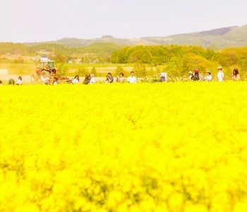 【北海道ミライノート×Domingo】滝川の菜の花祭りなど