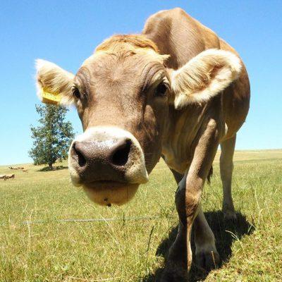 【ミライノート×Domingo】美瑛放牧酪農場での癒しの一枚など