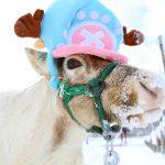 トナカイソリでサンタ気分!?北海道のクリスマスイベント2選!