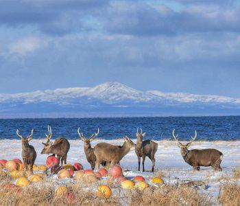 【北海道ミライノート×Domingo】別海町の雄大な風景など