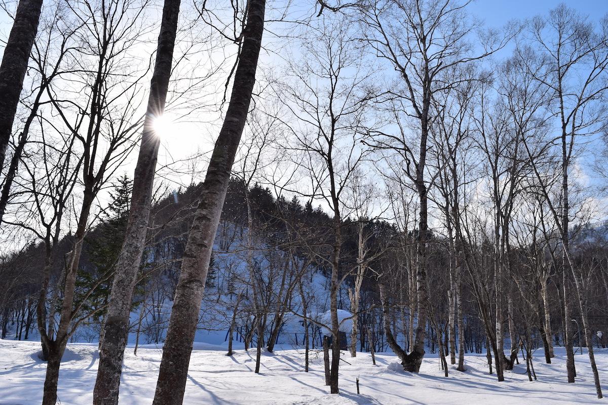 沼田町の森