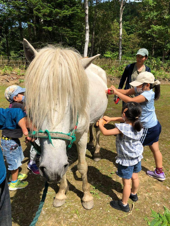 馬のふれあい体験の様子(沼田町まるごと自然体験プロジェクト【北海道沼田町】Facebookより)