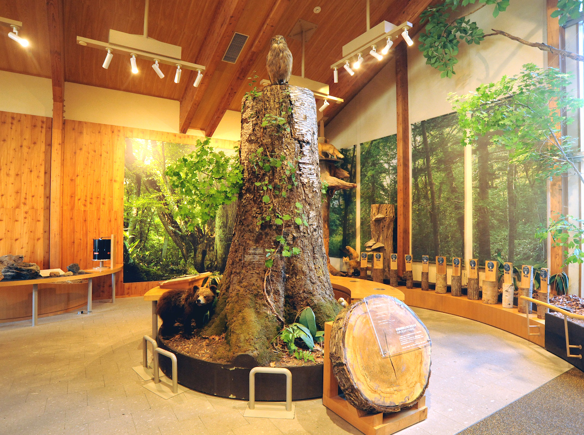 支笏湖ビジターセンター2