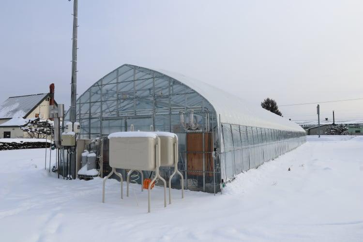 冬いちごの栽培開始