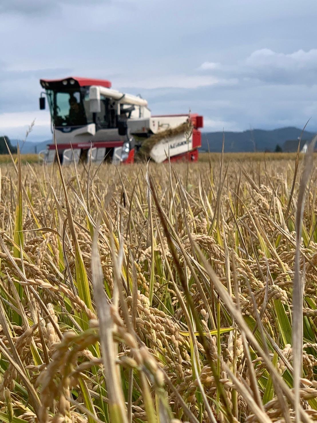 特別栽培米圃場
