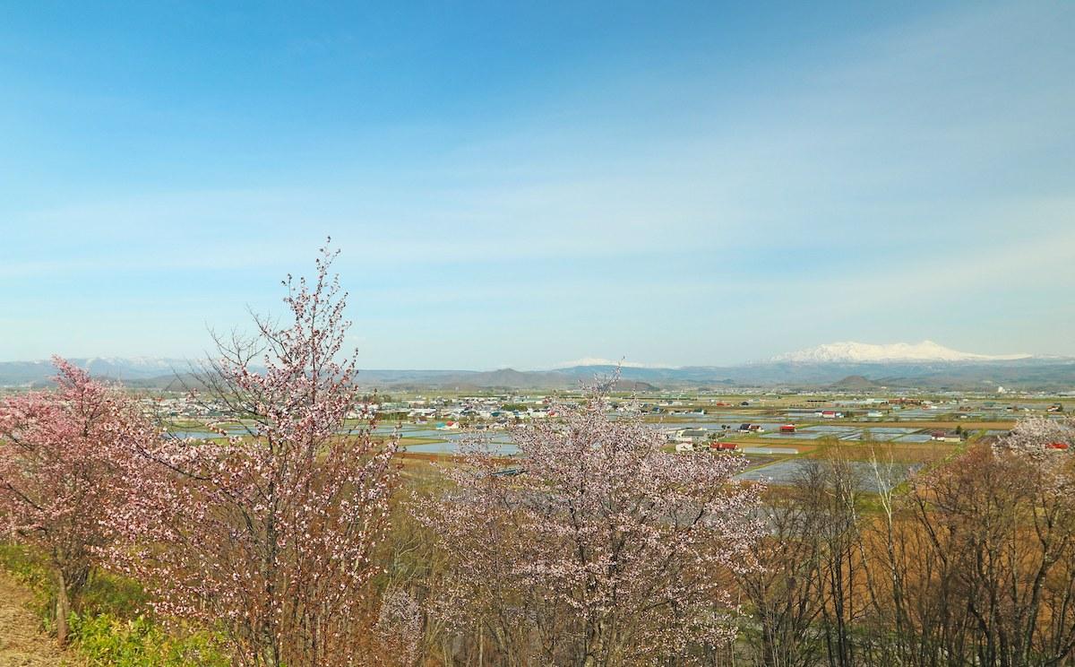 村上山公園