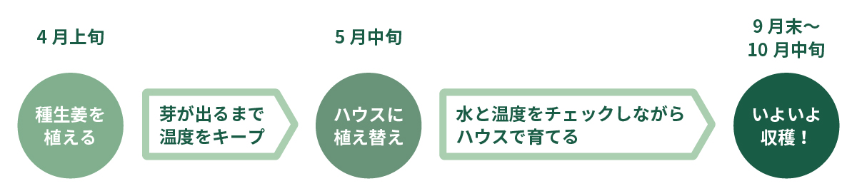 生姜の栽培スケジュール